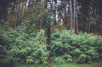 staviskiu piliakalnis
